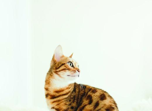 gato-revista-minha